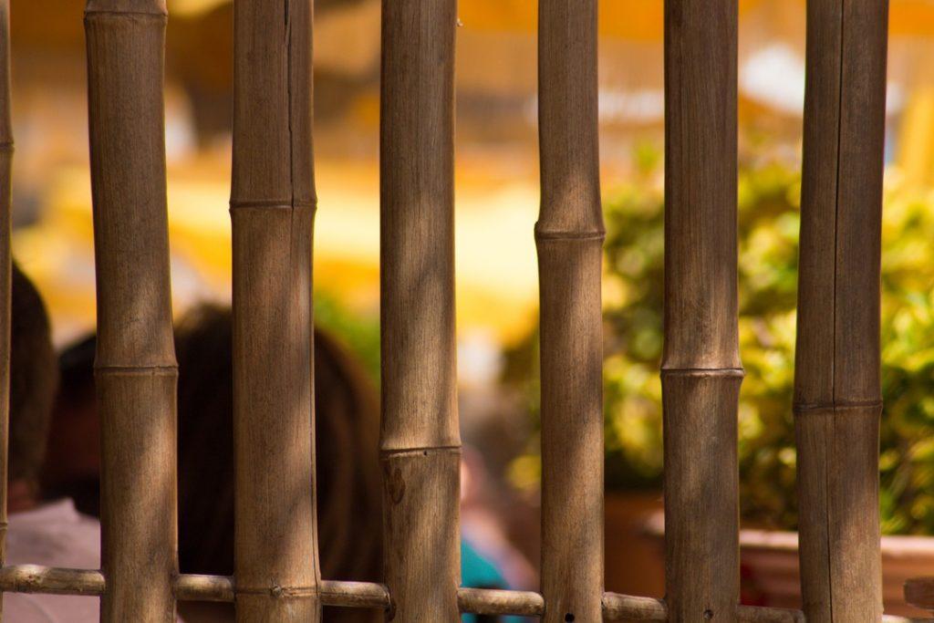 Cañas De Bambú En La Decoración De Interiores Y Jardines