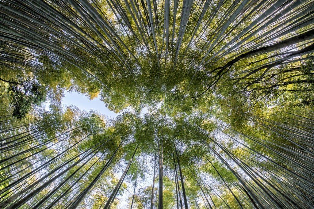 Información sobre el bambú